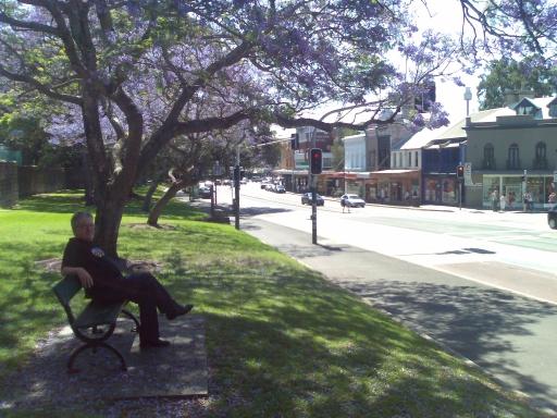 Jacaranda Tree - Oxford Street, Paddington