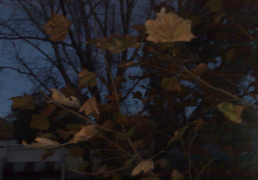 The leaves have also started to fall from the trees in my street. And while, in the summer, they're luxurious. In the winter, they become mere skeletons.