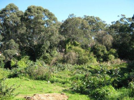 Sir Thomas Mitchell Reserve, The Ponds, Sydney