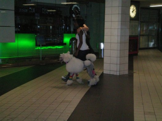 Two lesbians and their Europoodle at Stockholm's Central Station