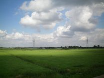 Dutch landscape viewed from the train