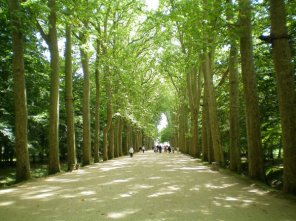 Walkway leading to the Castle of Chenonceau.