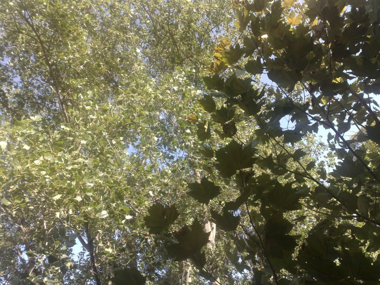 Breeze in the trees