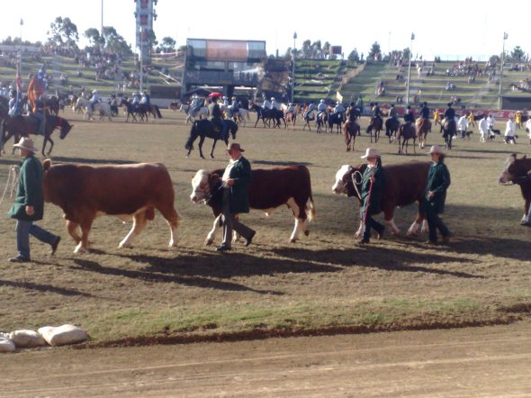 Livestock at the Royal Easter Show