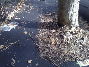 Autumn Leaves - Nickson Street, Surry Hills
