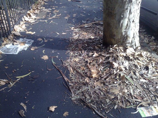 Autumn Leaves - Nickson Street, Surry Hills