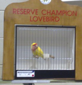Birdlife at the Royal Easter Show