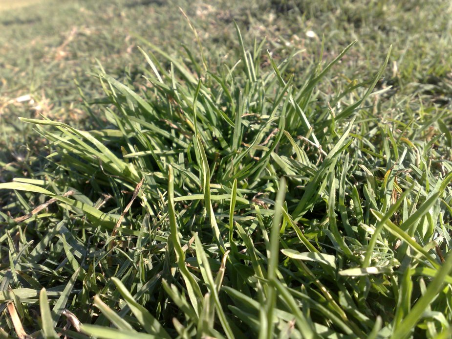 Grass in Moore Park, Sydney