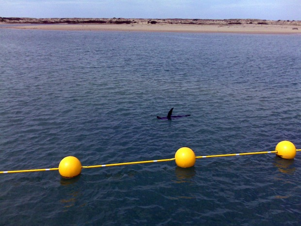A seal sunning itself in The Coorong