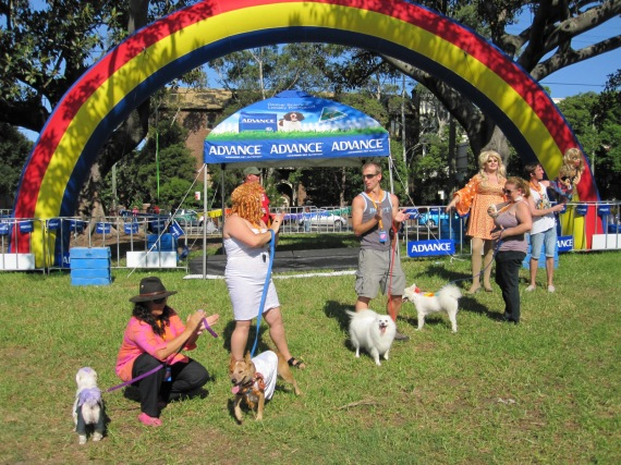 Dog show winners