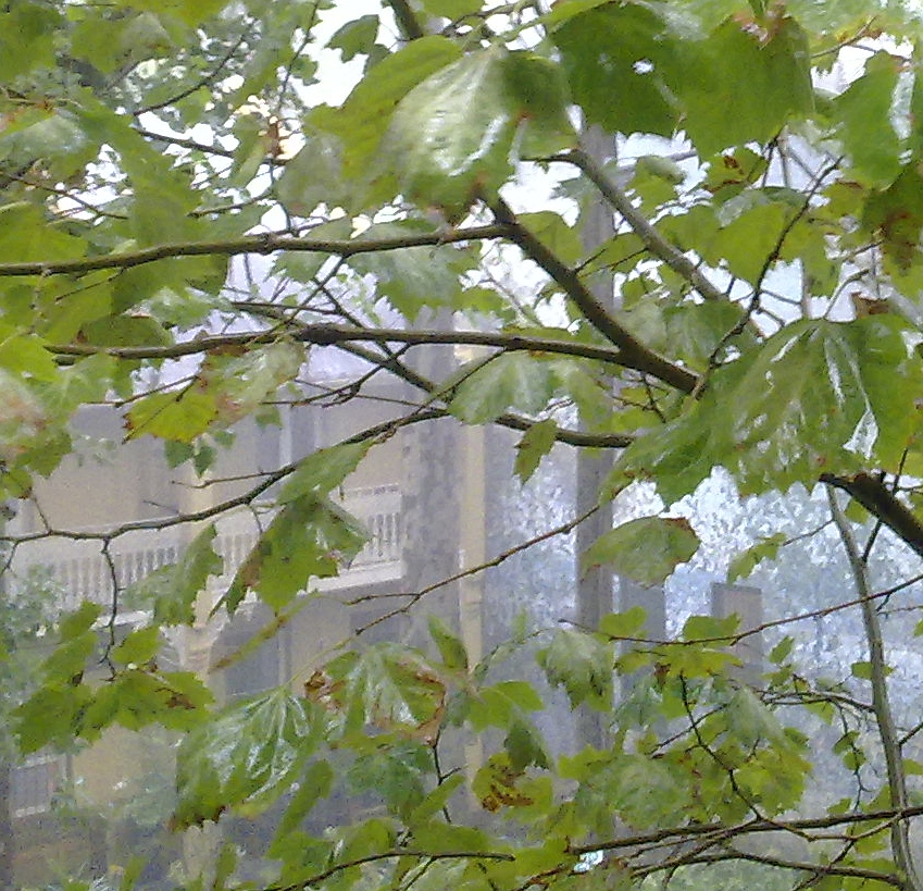 Rain on the leaves - the view from my window