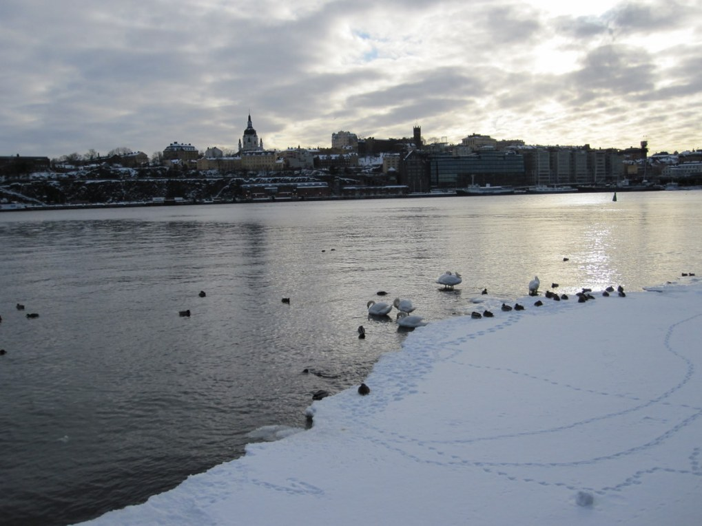 Ducks and swans near ice and snow