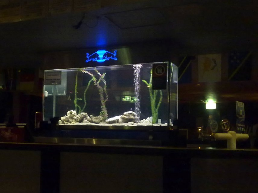 Fishtank at the Midnight Shift