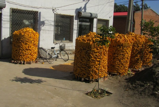 Corn stacks