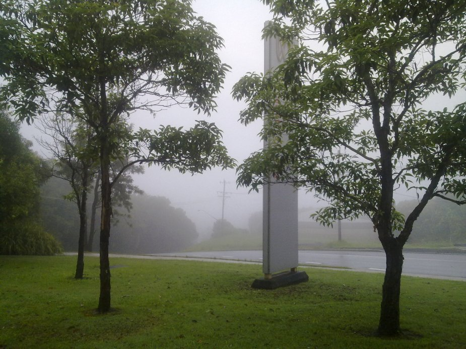 Misty summer morning, Lismore Heights