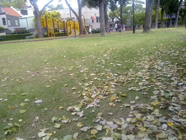 Fallen leaves in one of my local parks