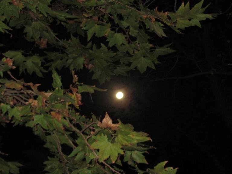 Full moon through the leaves