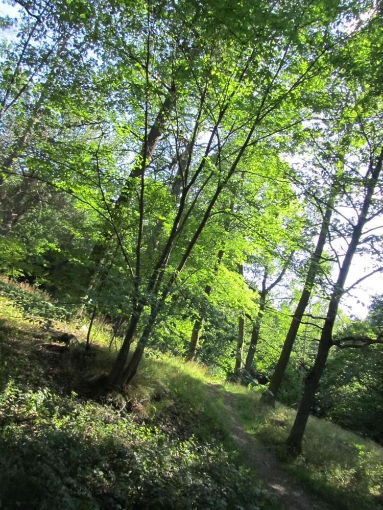 Went for a gorgeous afternoon walk on Djurgården
