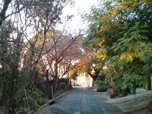 The street where I'm staying in Melville, Johannesburg