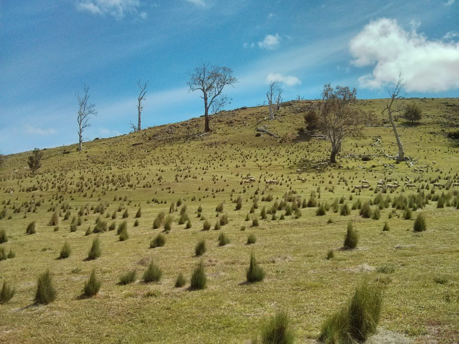 An almost treeless, gentle-sloping hill that you find so much in country Australia, snapped earlier today roughly half-way between Hobart and Launceston.