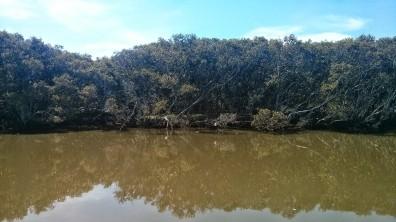 Parramatta River