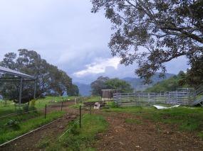 Nimbin Valley