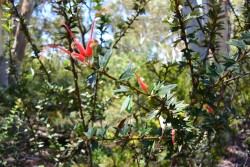 Botanic Gardens, Canberra