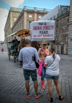 Something about their feet. An animal welfare protest outside the Royal Palace in Stockholm