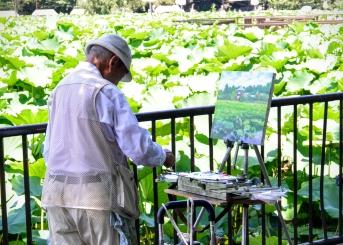 Tokyo Waterlillies