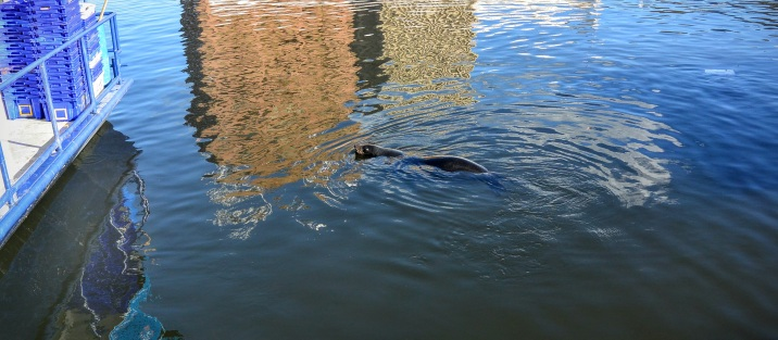 On my final day, there were sealions in the harbour.