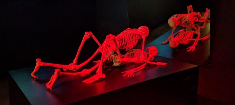 MONA - Skeletons having sex