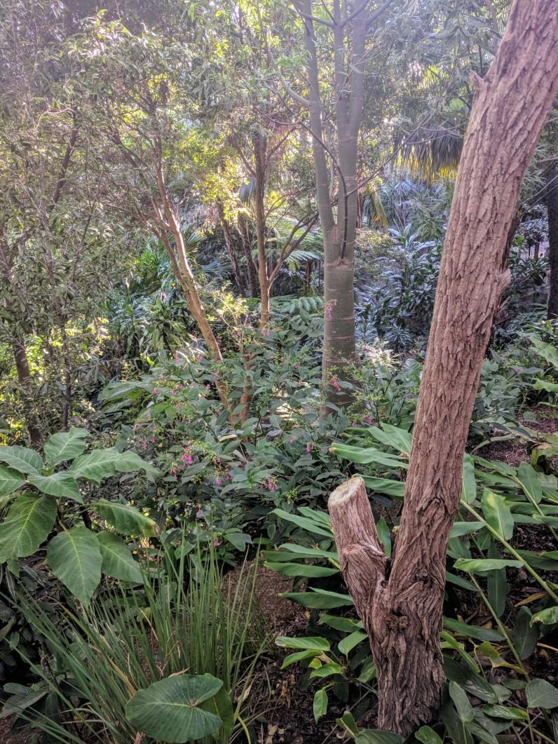 Bush in Wendys Secret Garden