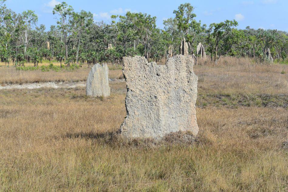 Termite Mount in Litchfield Park